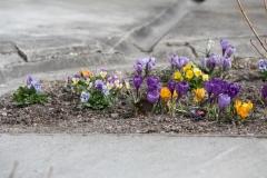 Wiosna w ogrodzie 2021